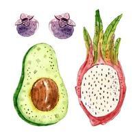 insieme dell'acquerello della frutta del drago di avocado, mirtillo, pitahaya