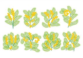 Icone Mimosa vettore