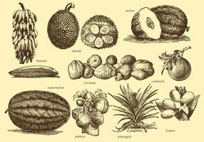 Frutta tropicale d'epoca vettore