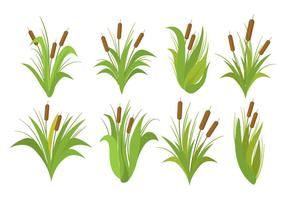 Set vettoriale di Cattails gratis