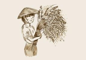 Sfondo di campo di riso gratis vettore