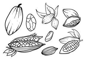 Vettore disegnato a mano di fave di cacao