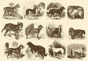 Illustrazioni di cani d'epoca vettore
