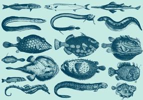 Creature acquatiche rare vettore