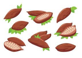 Vettore di fave di cacao