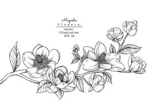 ramo di fiori di magnolia vettore