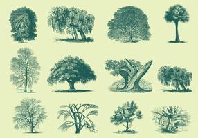 Illustrazioni di alberi verdi vettore