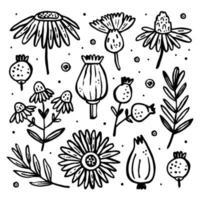 set di piante selvatiche