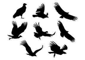 Vettore della siluetta dell'uccello del condor