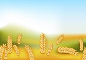 I raccolti del raccolto del riso nel campo vettore
