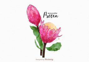 Fiore di protea acquerello vettoriale gratuito