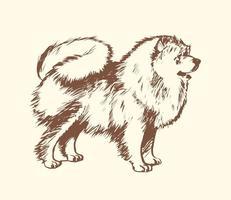 Illustrazione vettoriale di cane Pomeranian gratis