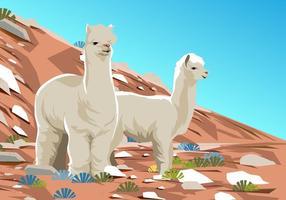 Alpaca al deserto vettore