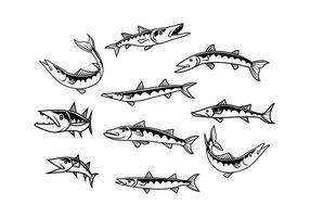Vettore di barracuda gratis