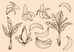 Vettore disegnato a mano libera dell'albero di banana
