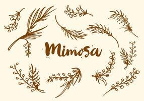 Vettore disegnato a mano libera della pianta di mimosa