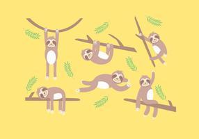 Vettore di bradipo