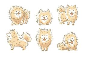 Vettore di Pomeranian