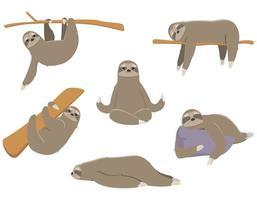 bradipo in pose diverse