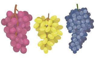 set di uve di diverse varietà