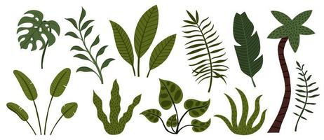 set di alberi e foglie di giungla tropicale disegnati a mano vettore