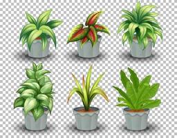 insieme di piante in vaso vettore
