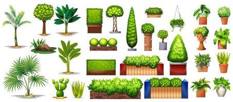 raccolta di specie di piante e alberi vettore