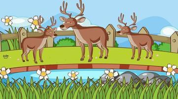 scena con le renne nel parco