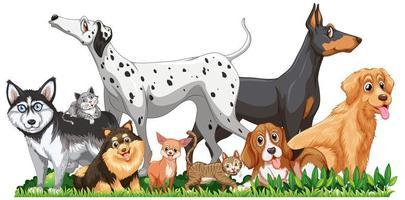 gruppo di cani diversi carino isolato vettore