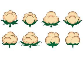 Vettore di fiori di cotone