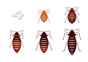 Bed Bug Vector gratuito