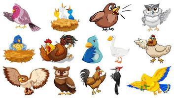 set di diversi uccelli in stile cartone animato
