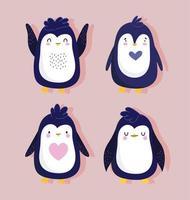 pinguini uccello piuttosto animale