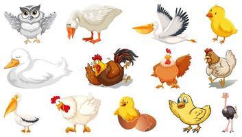 set di diversi uccelli in stile cartone animato isolato