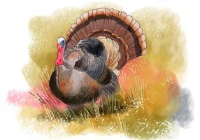 Uccello selvatico della Turchia vettore