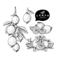 disegni di agrumi al limone vettore