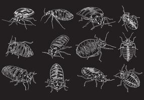 Insieme dell'illustrazione dell'insetto di letto