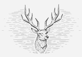 Illustrazione dei cervi di vettore