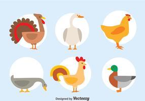 Vettore della raccolta dei gallinacei piacevole