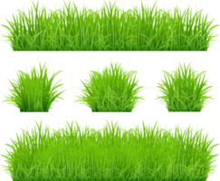 bordi di erba verde impostati vettore