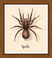ragno sul telaio wwoden