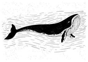 Illustrazione di balena vettoriale