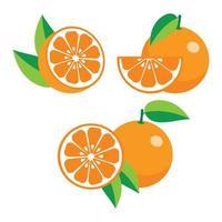 raccolta di arance diverse vettore