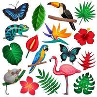 insieme di flora e fauna tropicale vettore