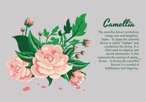 Illustrazione di disegno dei fiori della camelia vettore