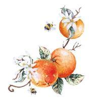 rami arancioni e api dipinte con acquerello vettore