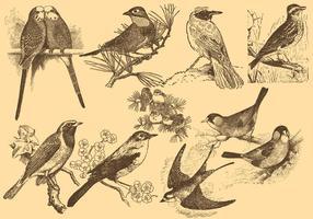Pose Nightingale Piccoli disegni di uccelli vettore
