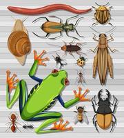 insieme di diversi insetti