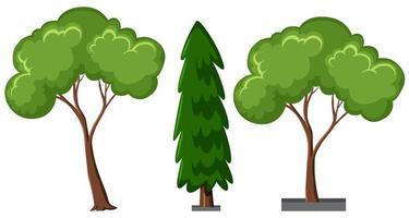 insieme di diversi alberi isolati su sfondo bianco