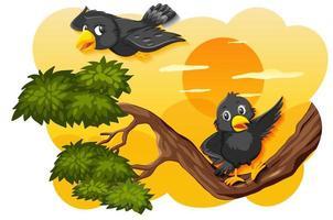 uccello nel tramonto della natura